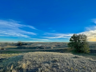 Montana T-Rex Ranch