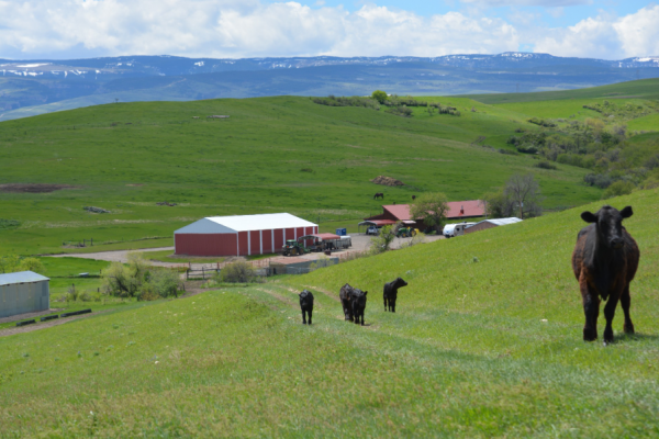 Snively Ranch